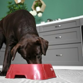 dog food without peas