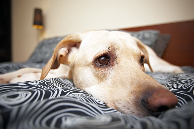 why dog pees in sleep