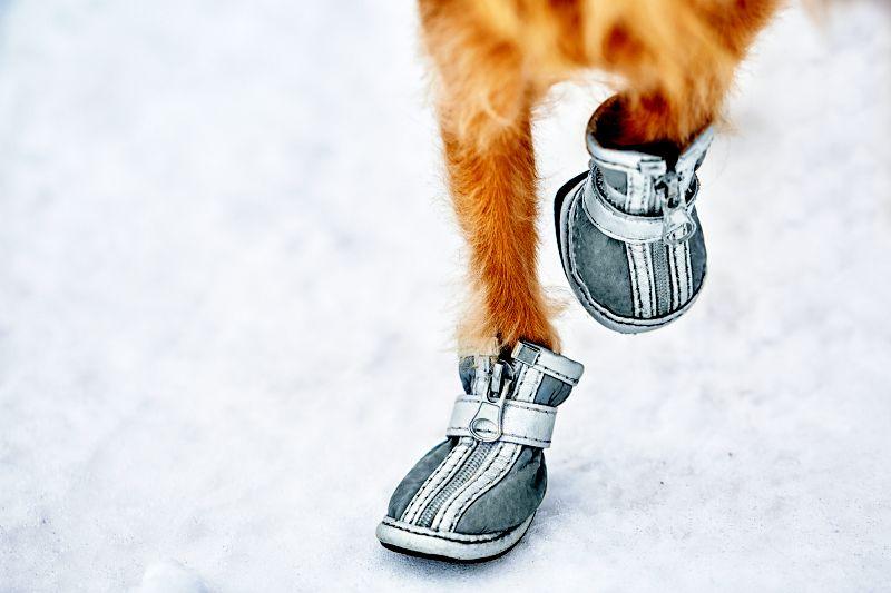 bad quality dog shoes