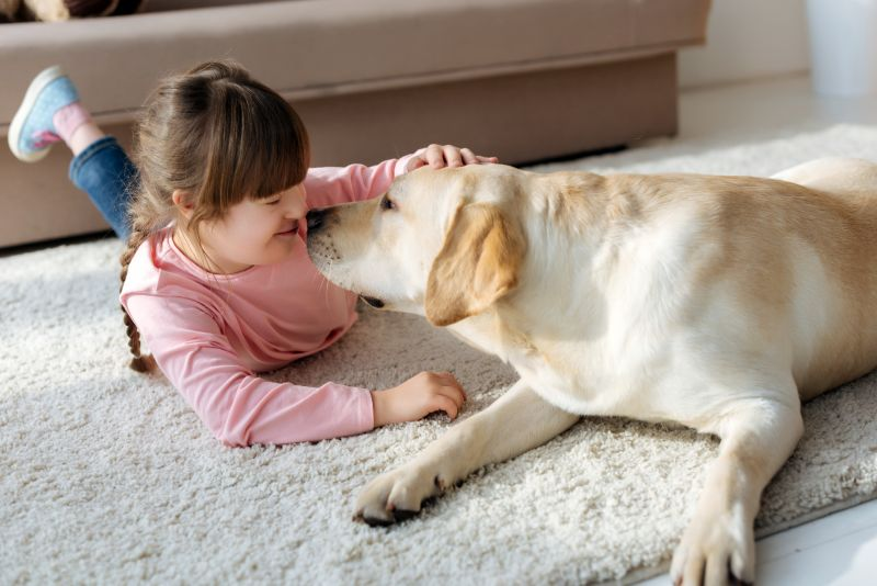 Labs are affectionate dogs
