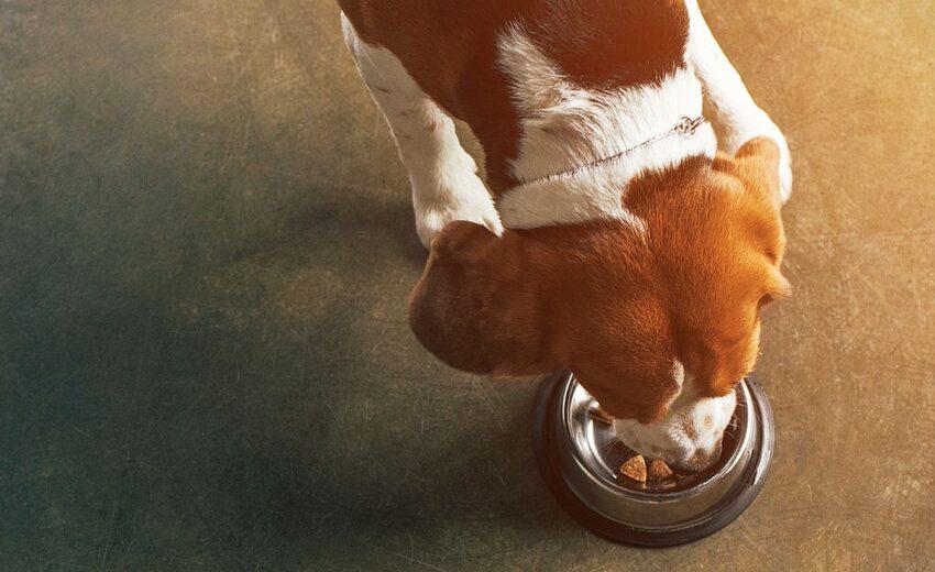 Nutro vs Blue Buffalo Dog Food