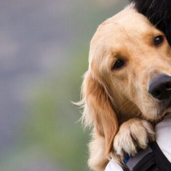 the most affectionate dog breeds