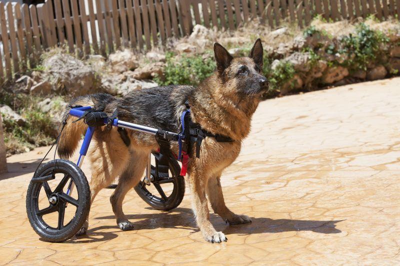 canine wheelchairs