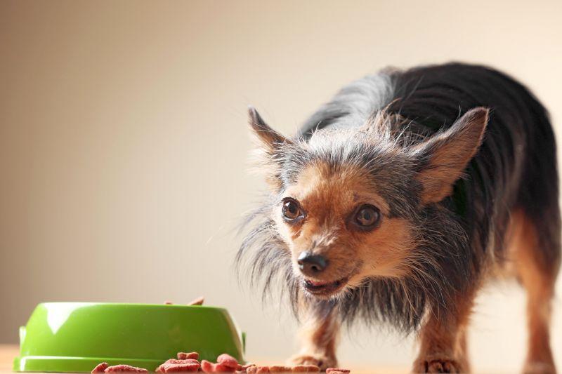 reasons to use dog food mat