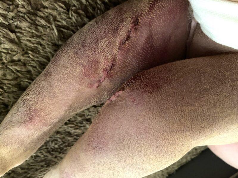 dog acl surgery healing