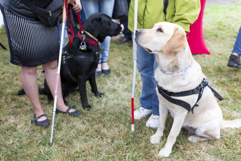 service dogs for blind people