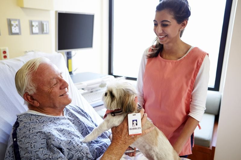 therapy dogs help cheer up people